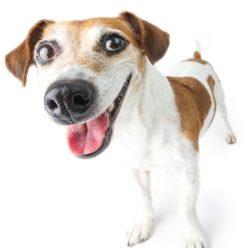 Hund lacht