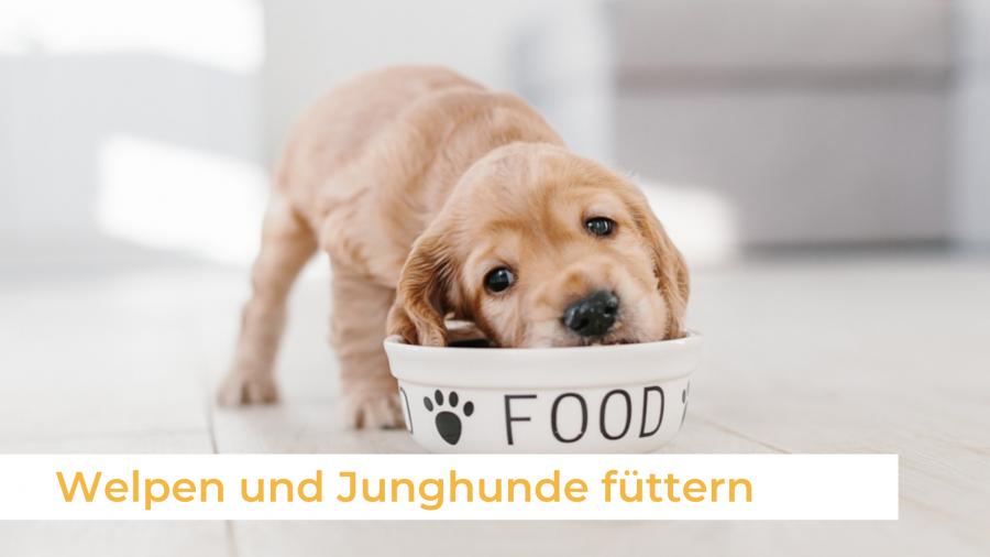 Welpen und Junghunde füttern